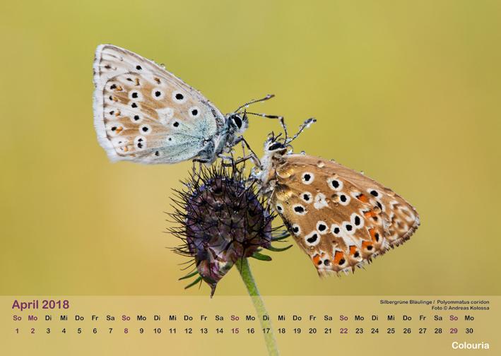 Schmetterlinge_2018_OK_6cm_sRGB_Apr.jpg