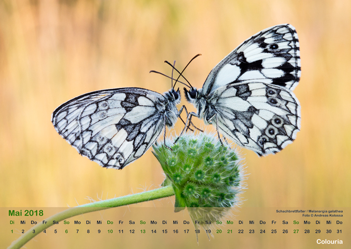 Schmetterlinge_2018_OK_6cm_sRGB_Mai.jpg