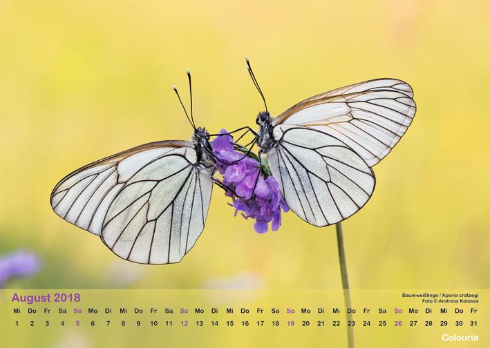 Schmetterlinge_2018_OK_6cm_sRGB_Aug.jpg