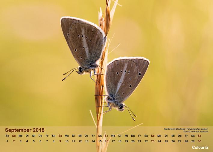 Schmetterlinge_2018_OK_6cm_sRGB_Sep.jpg