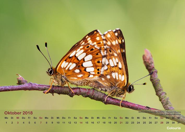 Schmetterlinge_2018_OK_6cm_sRGB_Okt.jpg