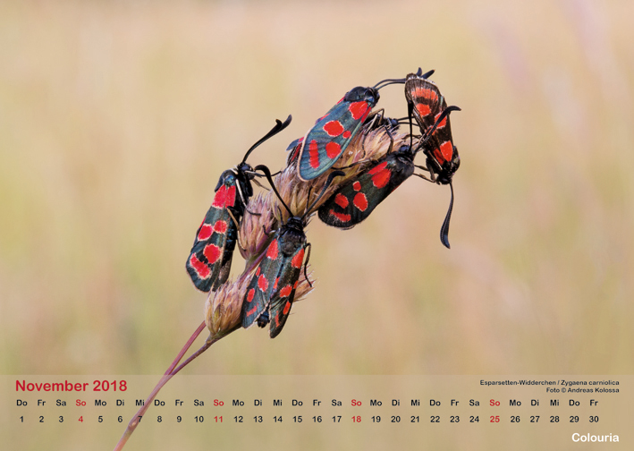 Schmetterlinge_2018_OK_6cm_sRGB_Nov.jpg