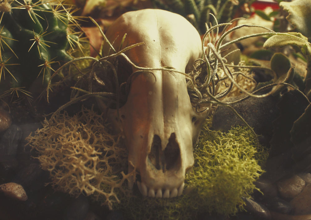 Custom Raccoon Skull Succulent Terrarium with Quartz Crystal