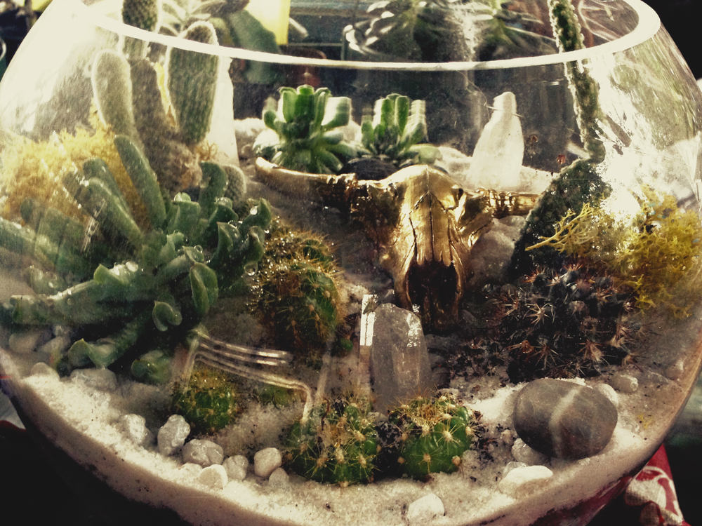 Custom Terrarium for Claire Sommers Buck