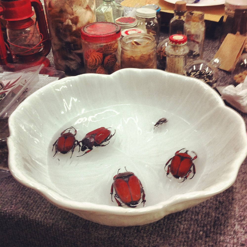 Preparation of Beetles for Anticipation of the Afterlife