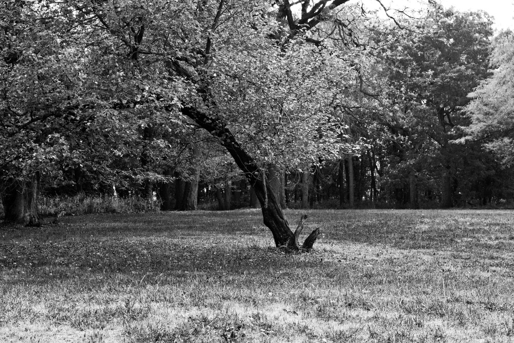 Leaning Tree 01 BW.jpg