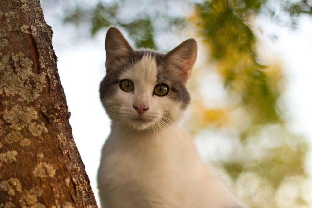 Steve's Cat.jpg