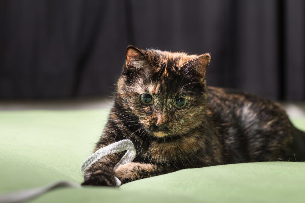 Cat Play-134.jpg