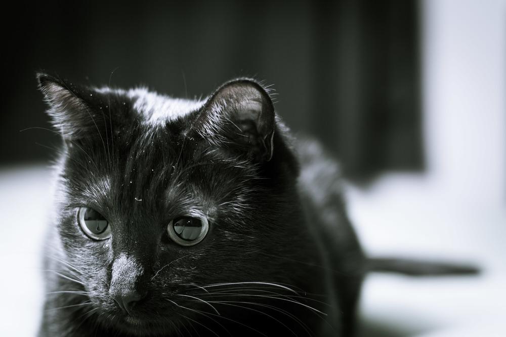 Cat Play-139.jpg