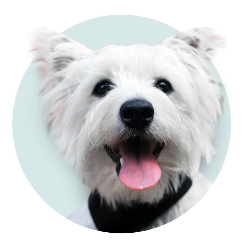 Wally i6 Graphics Mascot