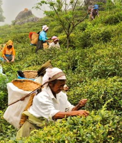 Fairtrade Canada