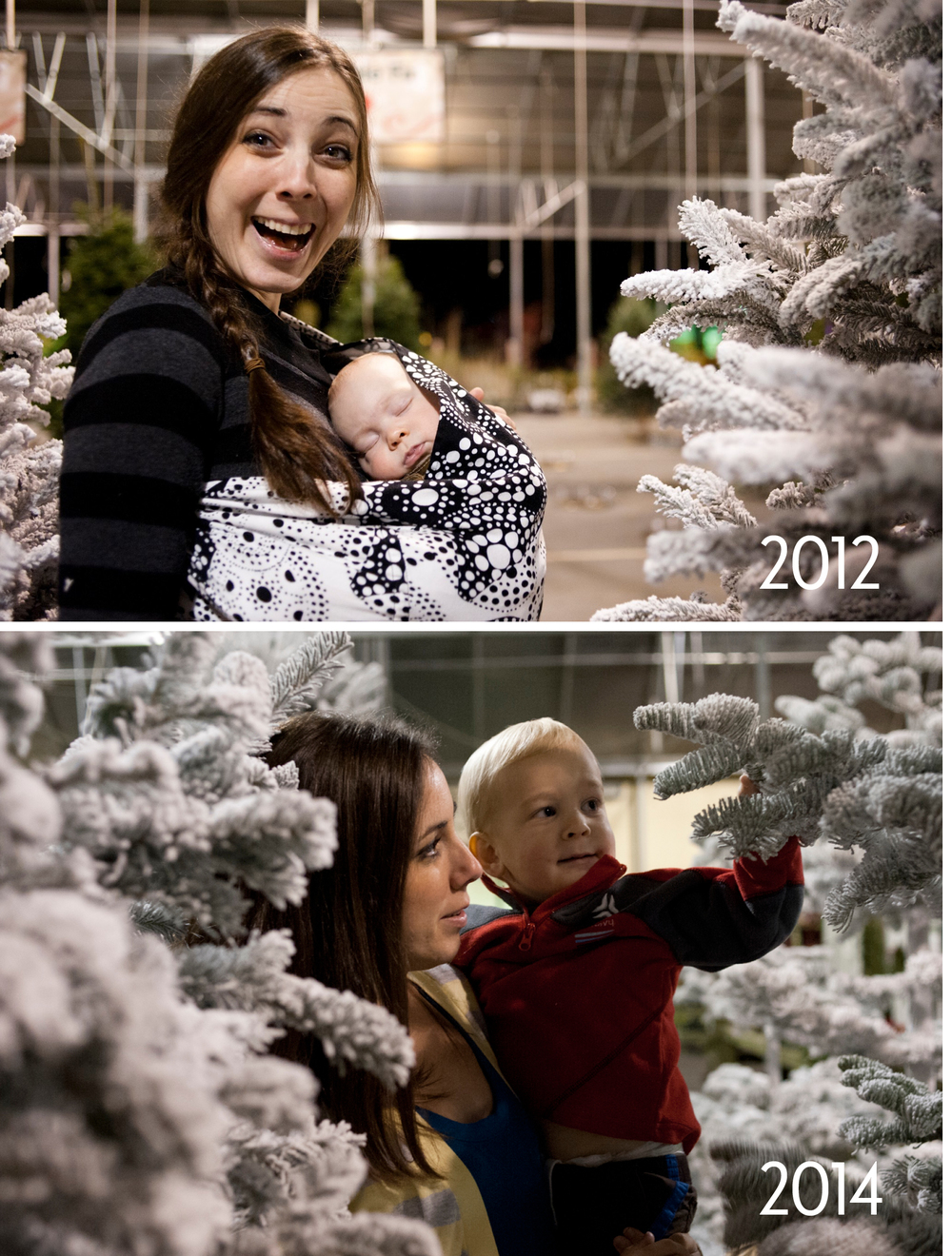 by the trees 2012 and 2014.jpg