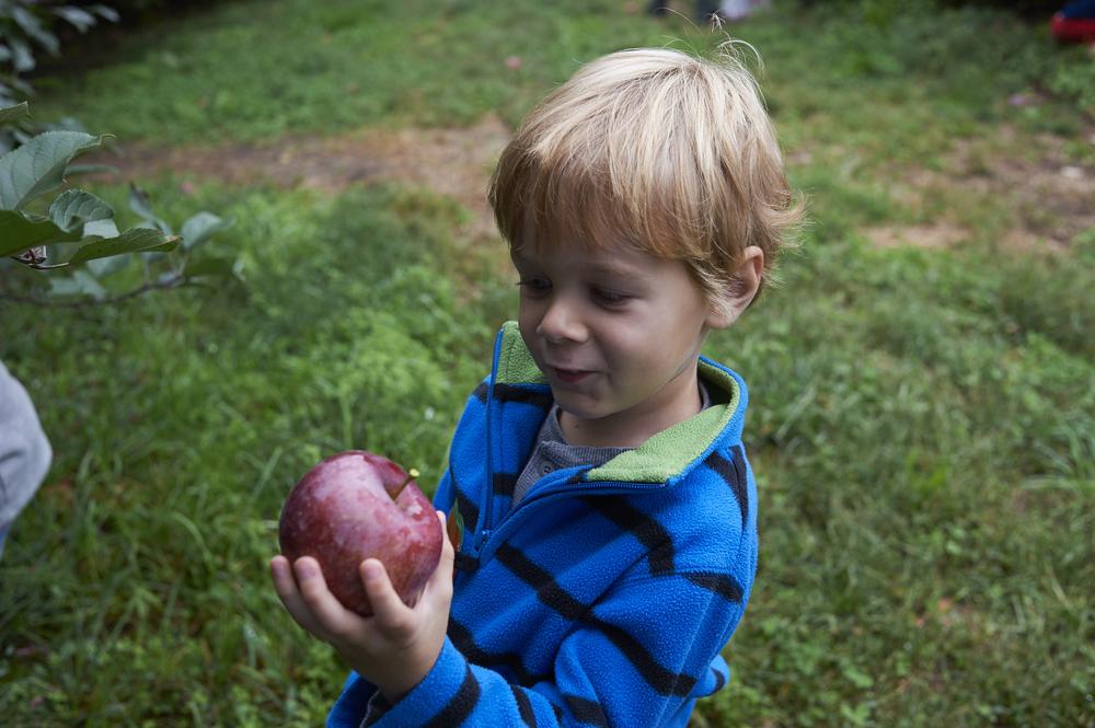 apple orchard_jonahsbday_14.jpg