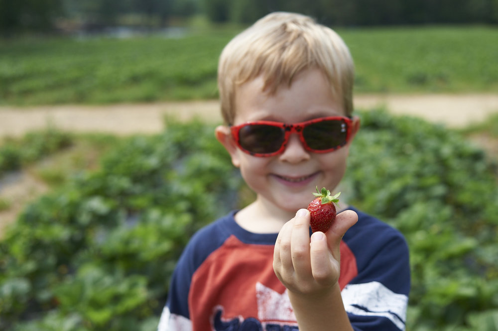strawberry picking, lccl farm, rome, GA, family, lifestyle photography, its the everyday