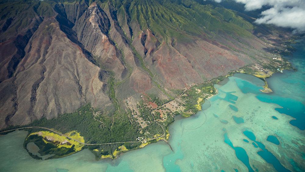 Philodoria  have colonized nearly every Hawaiian Island, dispersing between islands via trade winds.