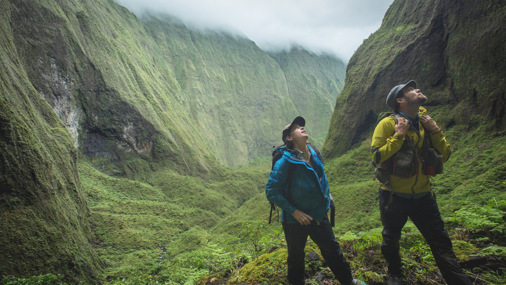 Two researchers survey for rare  Philodoria  host plants at the center of Kauai Island.