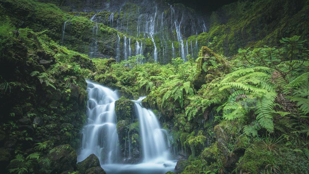 Many of  Philodoria's  host plants are found in pristine Hawaiian rainforest habitat.