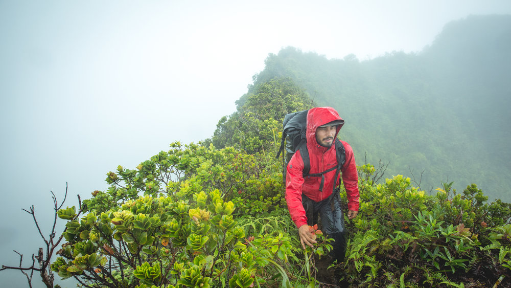 By visiting high altitude Hawaiian cloud forests, researchers discovered several new species of  Philodoria.