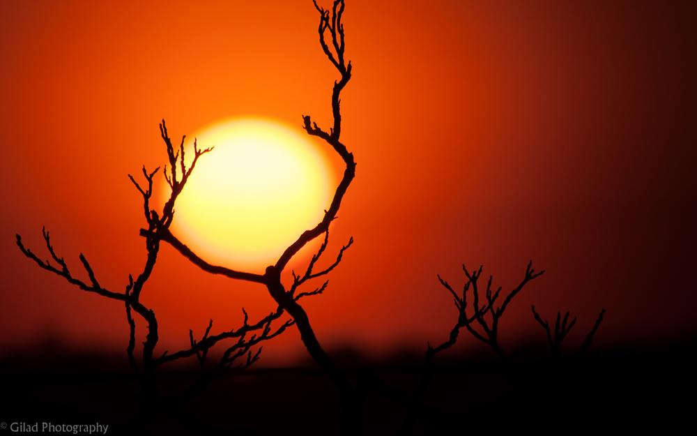Sunset between a branch in Ridgefield NJ