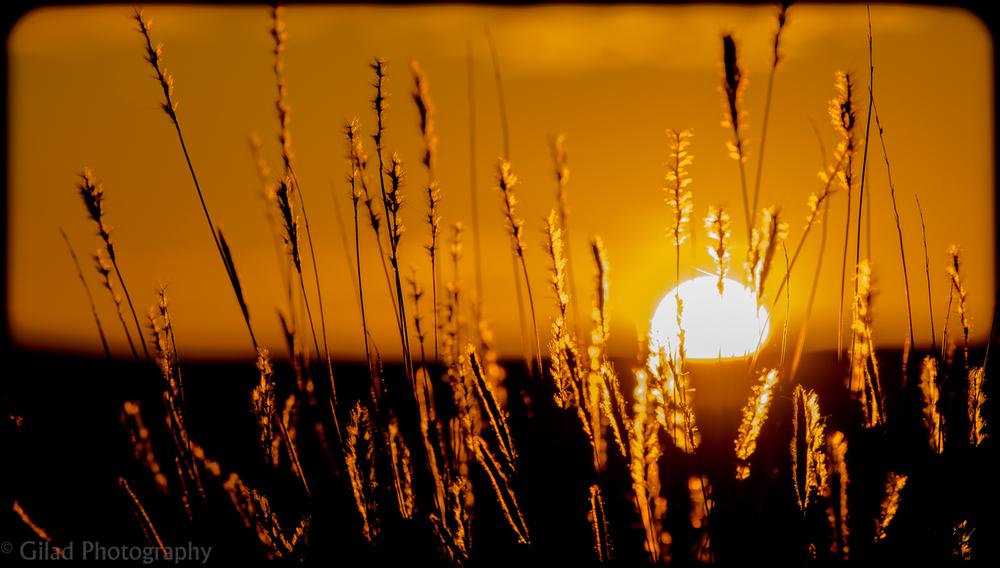 Sunset through weeds in Arizona