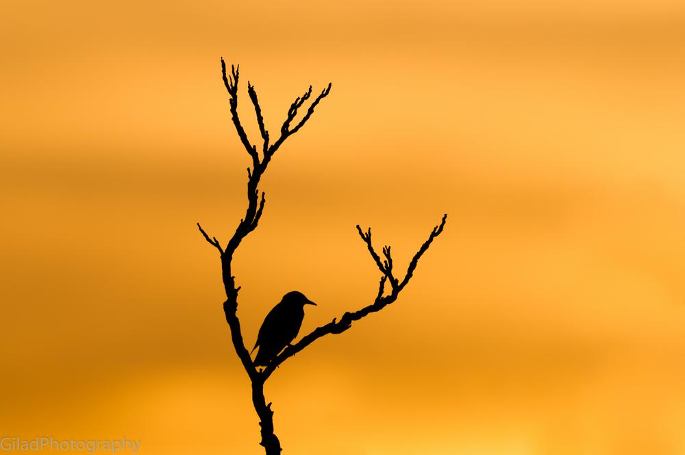 A silhouette of a bird outside my window in Ridgefield NJ