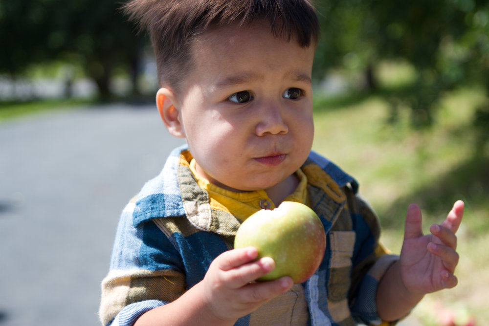 ApplePicking-13.JPG