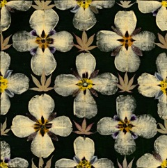 Winning textile print Herbarium  from 2012 by designer Gunilla Lagerhem Ullberg for the client Kasthall