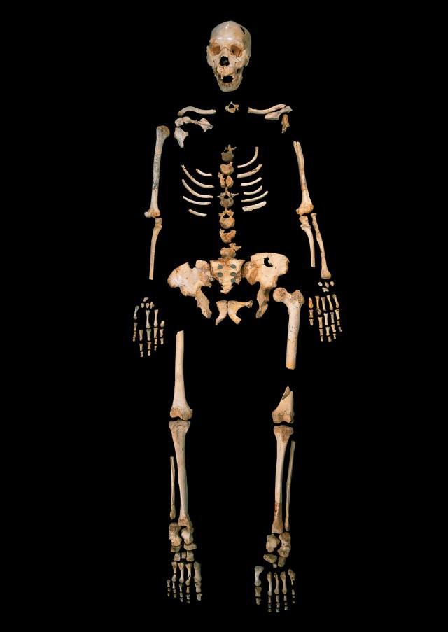 4_Homo_heidelbergensis-640x903.jpg