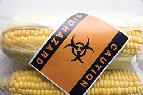 gmo corn SS.jpg