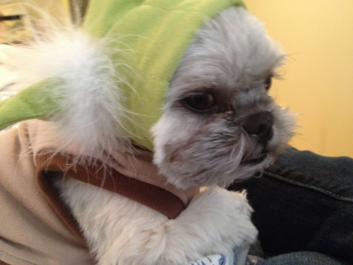 Sebastian of The Joodlum Group sporting Yoda Costume
