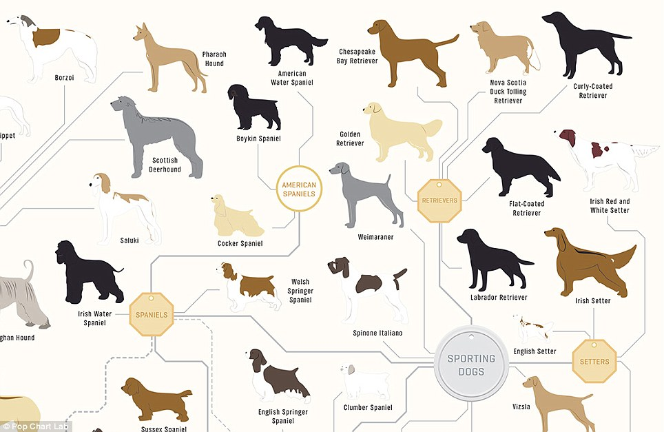 Examples Of Pedigree Names For Dogs