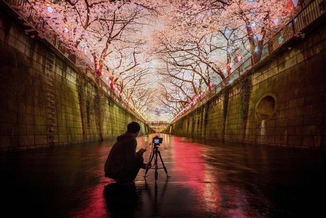cherry-blossom-season-2014-4-652x435.jpg