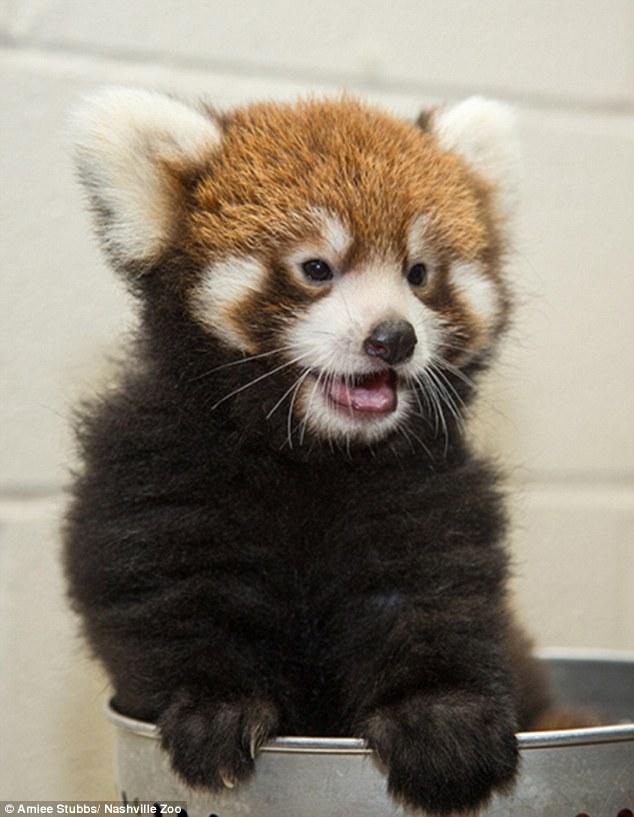 1409931481584_wps_6_Nashville_Zoo_is_celebrat.jpg