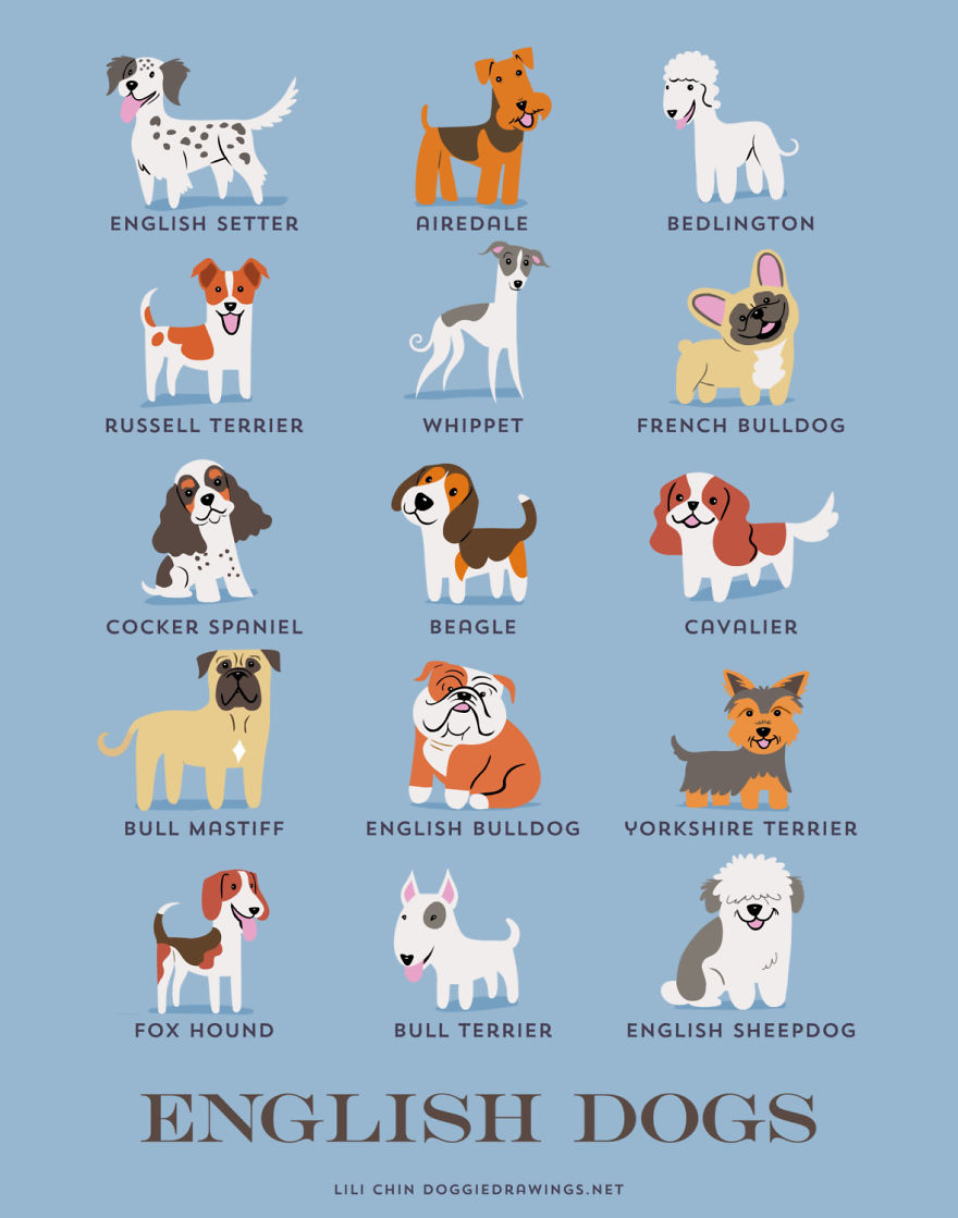 Dogs-Of-The-World-Cute-Poster-Series-Shows-The-Geographic-Origin-Of-Dog-Breeds5__880.jpg