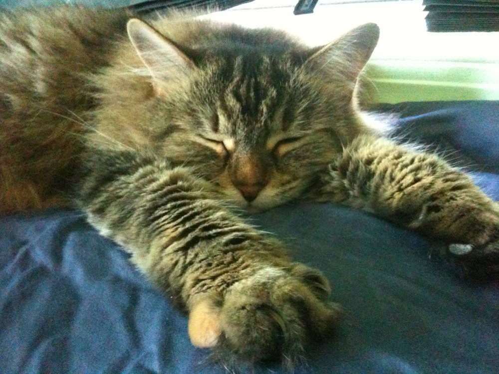 Declawing Cats Humane Cat Declawing May be Outlawed