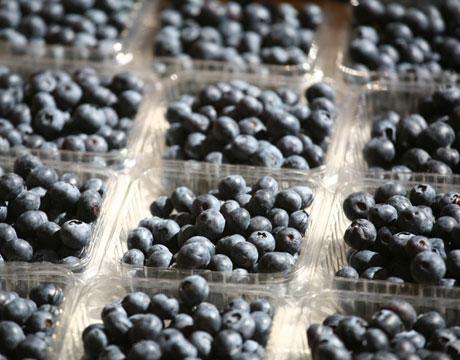 blueberriesnotmineoct2012.jpg