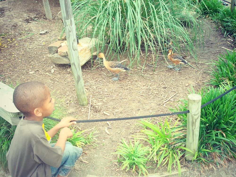 zoo2sept2013.jpg
