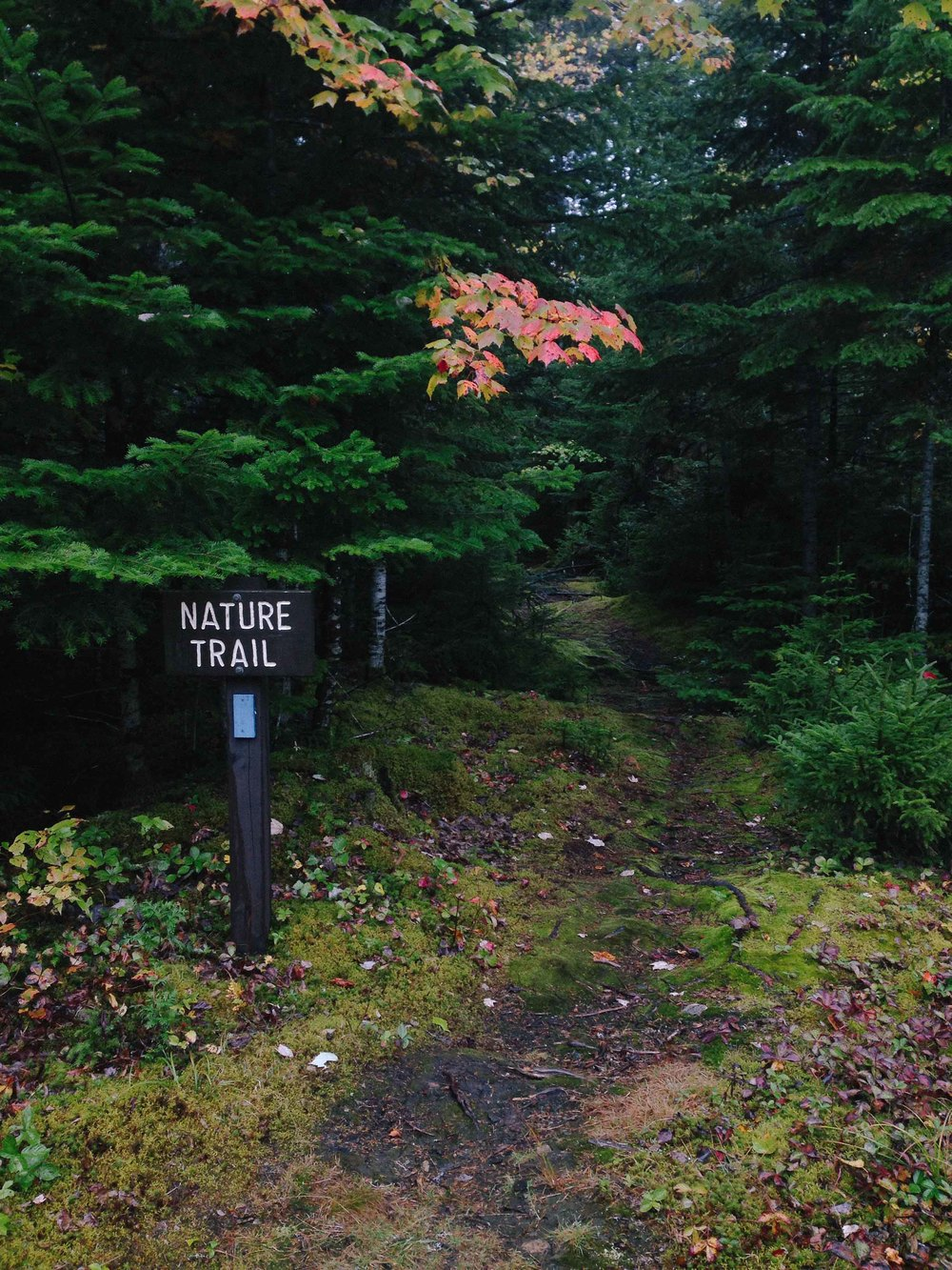 Favorite hike on earth--the nature trail outside of the Cobscook ranger station