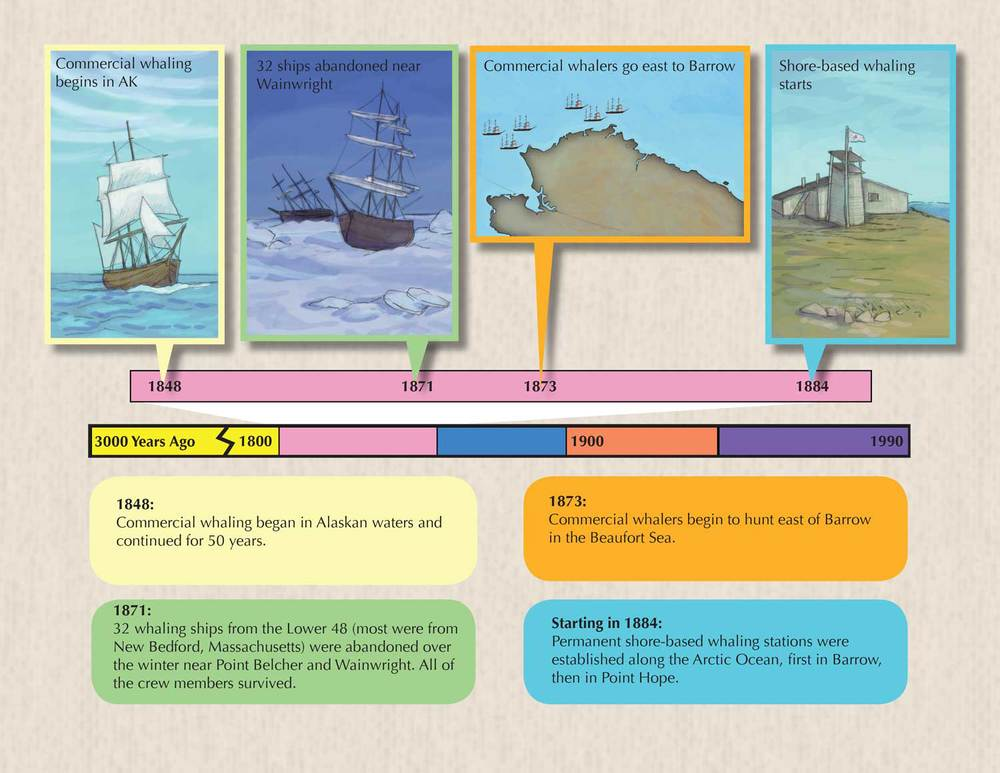Whaling Timeline