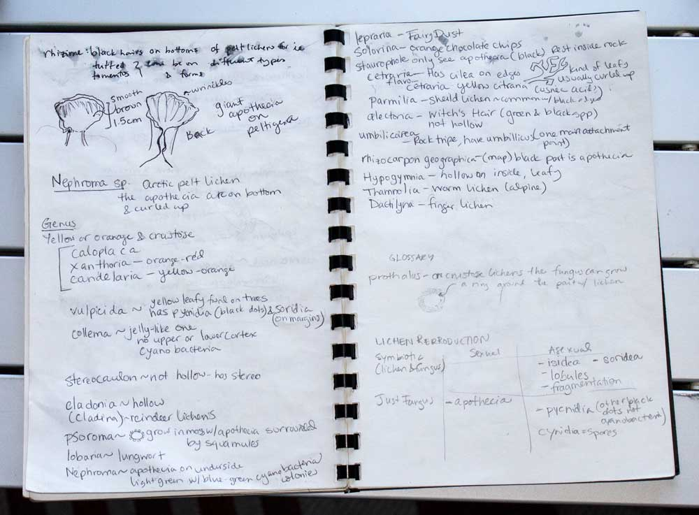 Notes from class in my sketchbook. I keep a lighter weight unlined paper in my sketchbooks for quick sketches and note taking.
