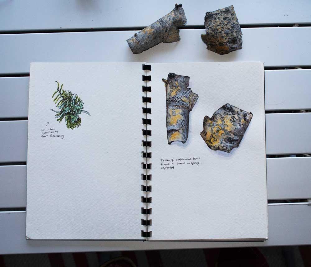 bark_sketchbook.jpg
