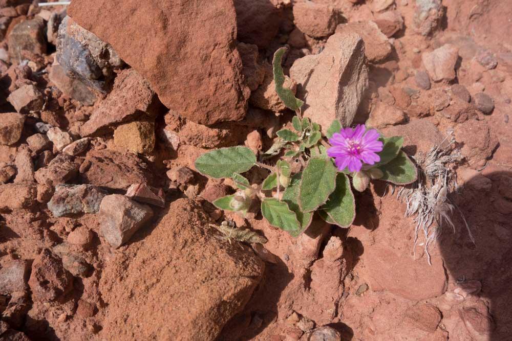 GC_flower2.jpg