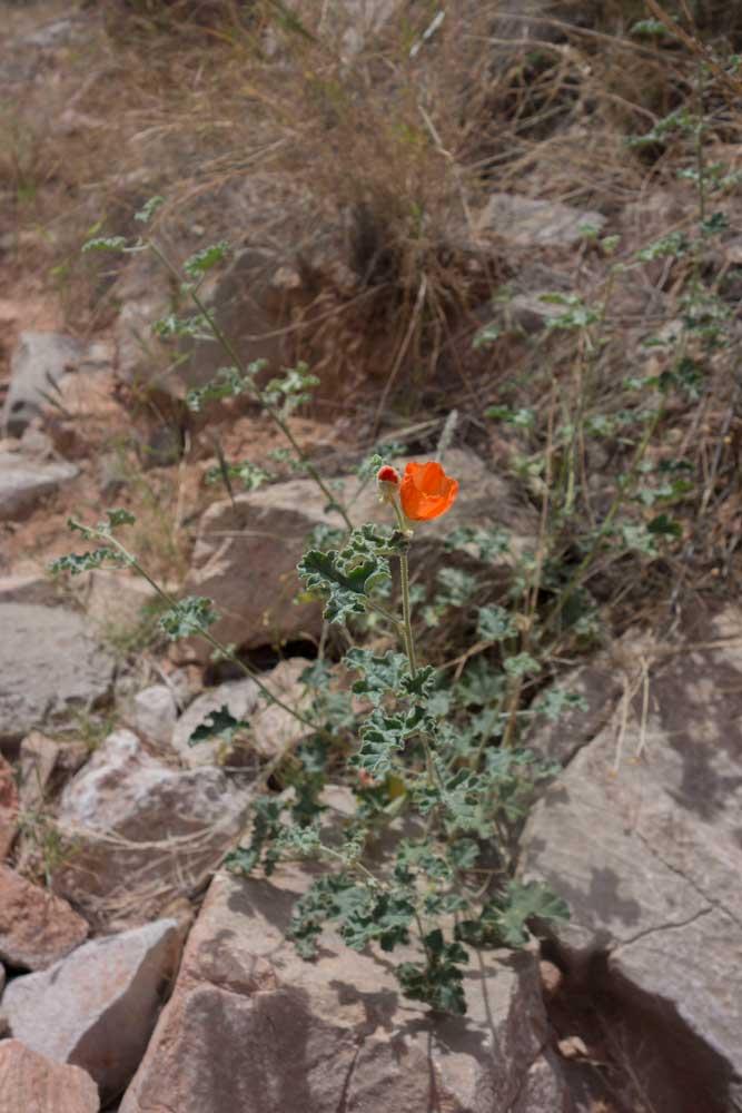 GC_flower3.jpg