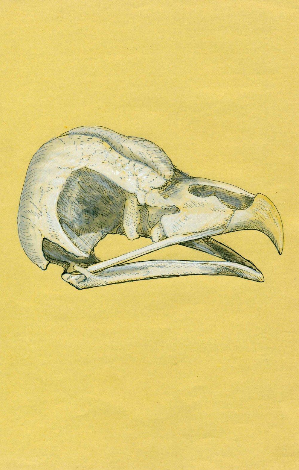 KL_yellow_owl.jpg