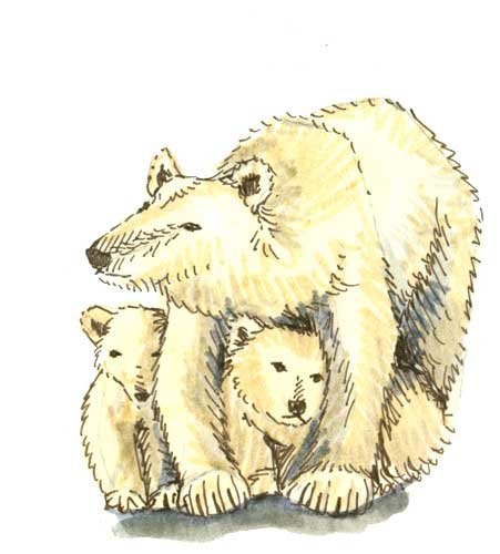 Apun_Polar_Bears.jpg
