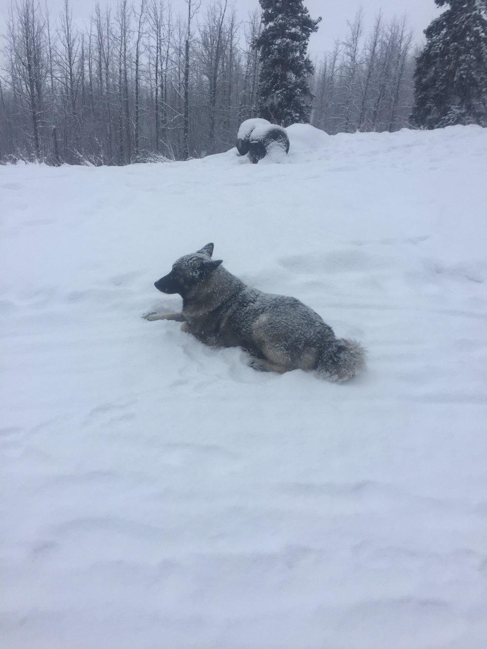 WS_snow.jpg