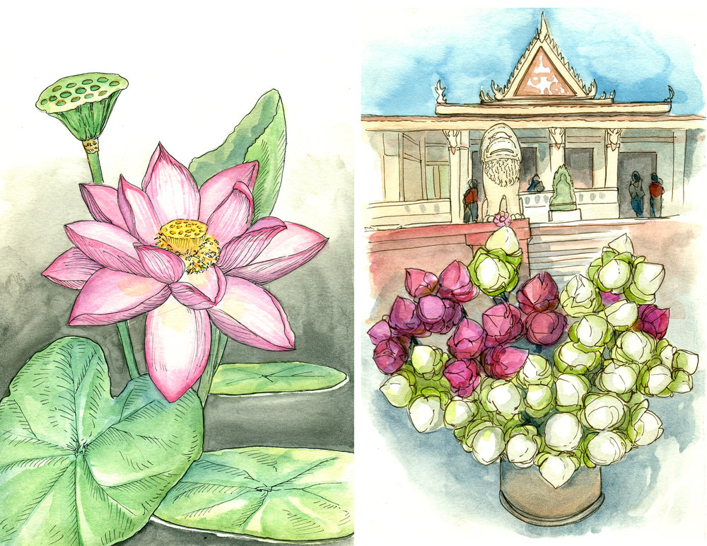 Sketchbook spread of lotus flower illustration (left) and lotus buds for sale as offerings at a temple in Phnom Penh (right). Watercolor and pen.