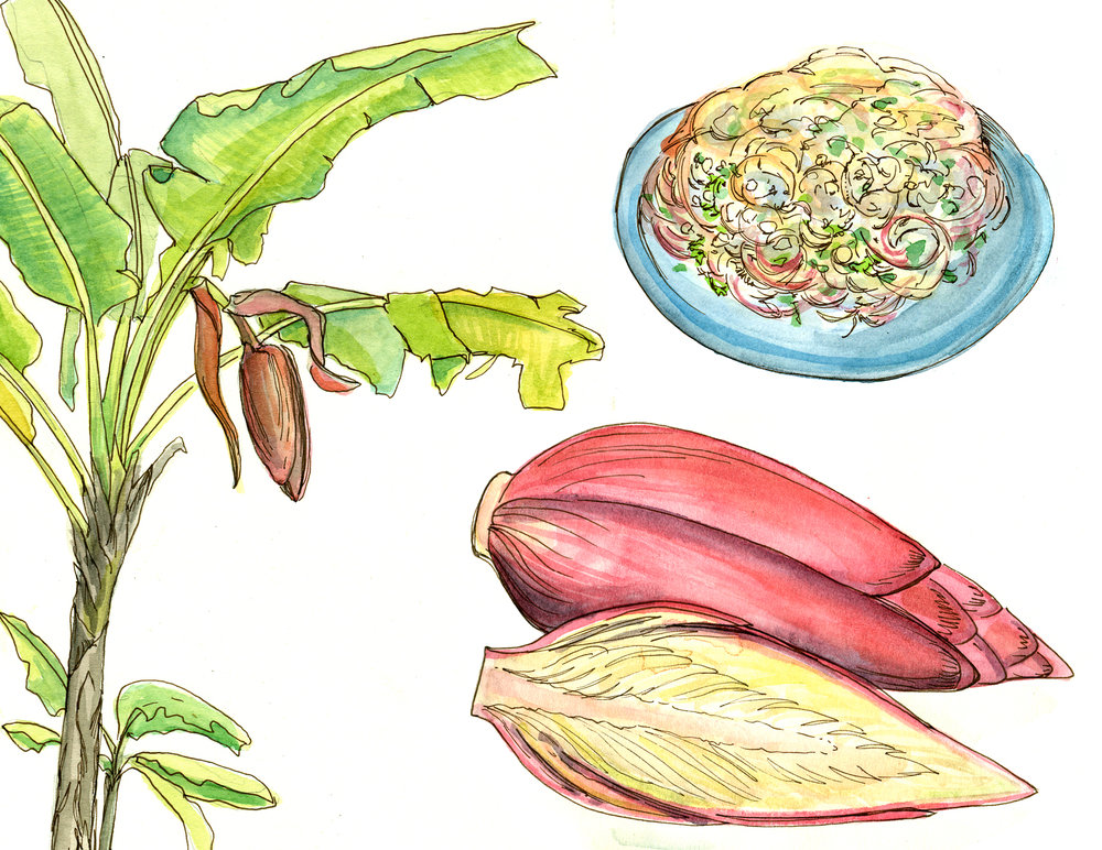 Sketchbook spread of Banana Blossom growing in situ (left) and how they are used to make banana blossom salad (right). Watercolor and pen.