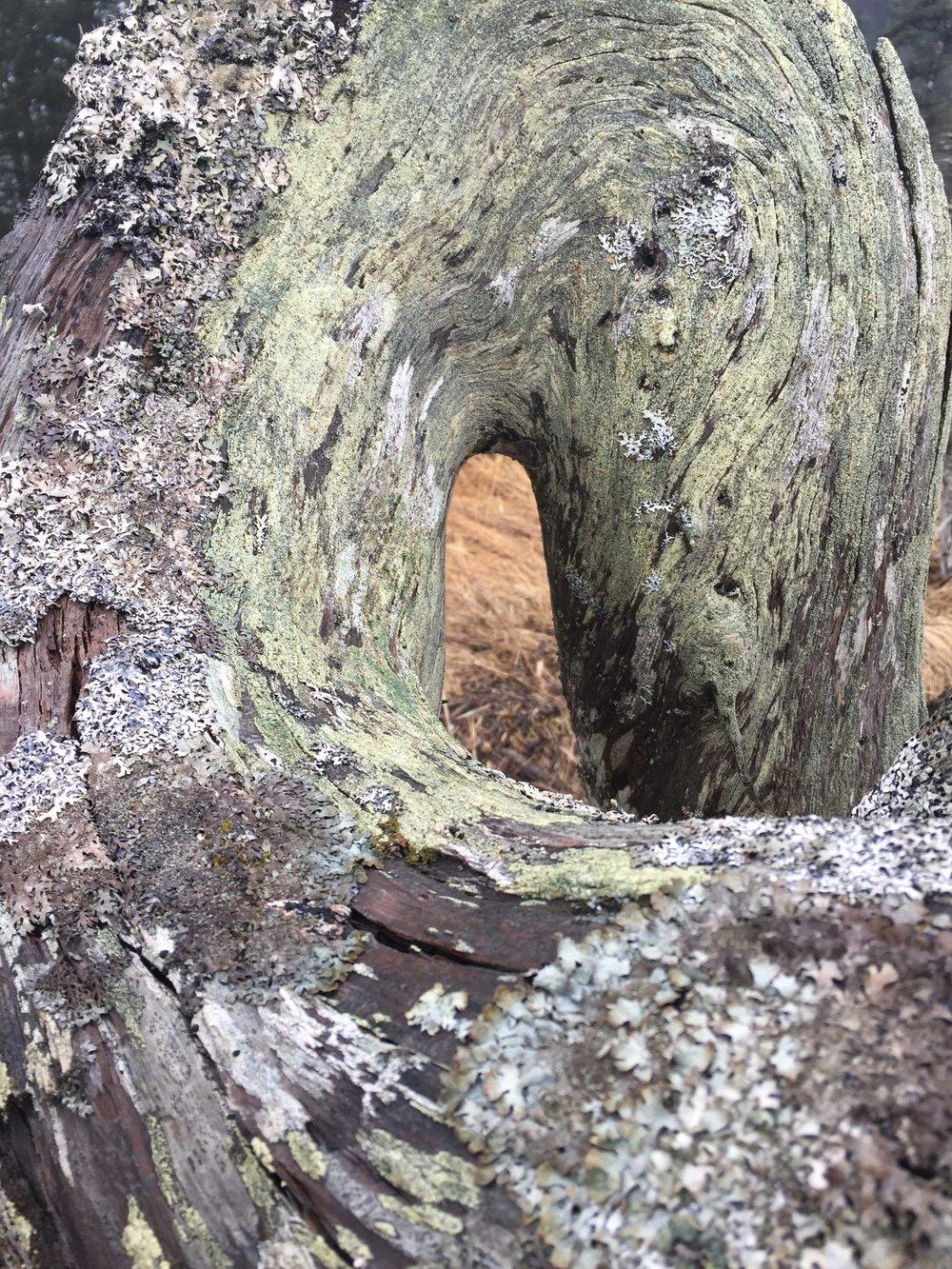 sol_tree1.jpg