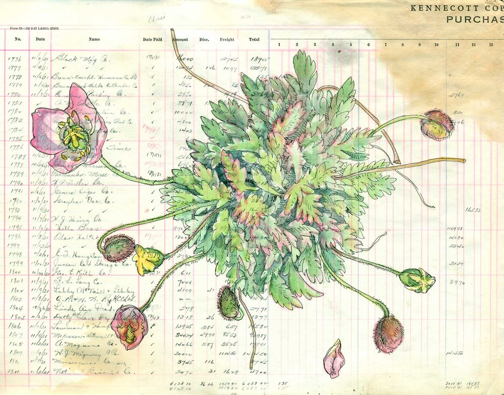 Poppies1_W.jpg